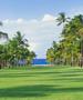 Nisbet Plantation - Avenue of the Palms